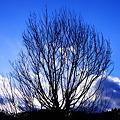 Photos: 冬の樹