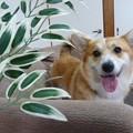 Photos: 笹の葉サラサラ2