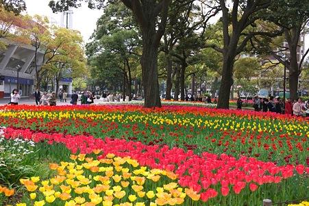 2012.04.19 横浜公園 チューリップ 頑張れDeNA