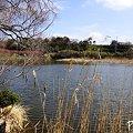写真: 池のほとり・・