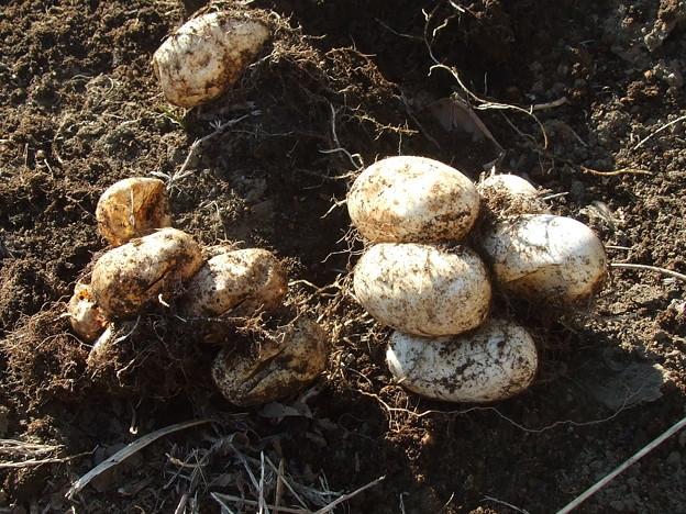蛇の卵1 - 写真共有サイト「フォト蔵」