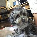 Photos: このままで保護犬に・・・