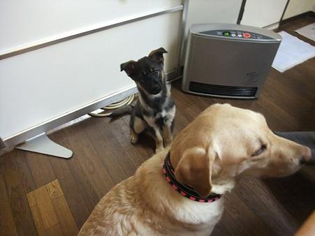 犬大好きな健太