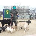Photos: 5頭でのお散歩
