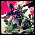 写真: 多肉植物