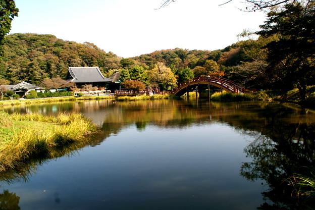Photos: 称名寺の本堂風景!(111123)