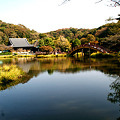 写真: 称名寺の本堂風景!(111123)