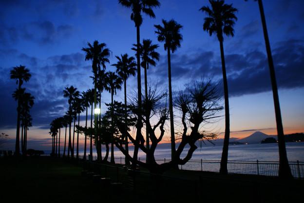 Photos: 日没後の薄明かりとパームツリー!(111126)