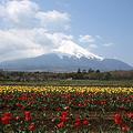 Photos: 花の都