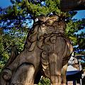 Photos: 住吉大社鳥居の狛犬吽形