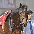 Photos: Tosen Homareboshi 01