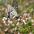 Photos: Butterfly
