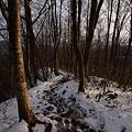 初冬のブナの登山道