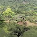 Photos: 110513-43栗林公園・芙蓉蜂から