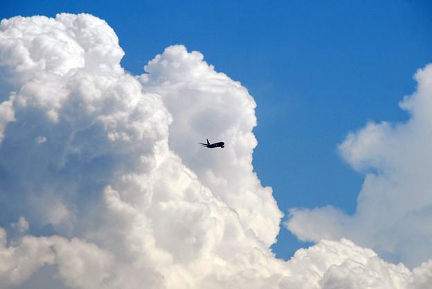 写真: 入道雲と飛行機