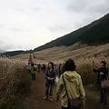 IMG_8067金時山登山・仙石原のすすき