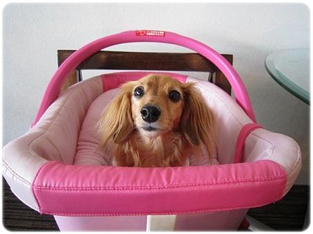 20110818 犬服教室(1) 受講中★JURI