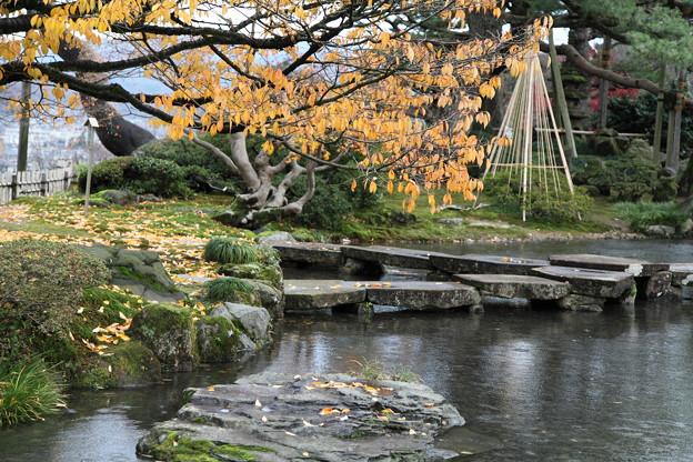 雁行橋と旭桜  兼六園