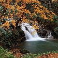 Photos: 七ッ滝 6の滝(3) 落ち葉の絨毯