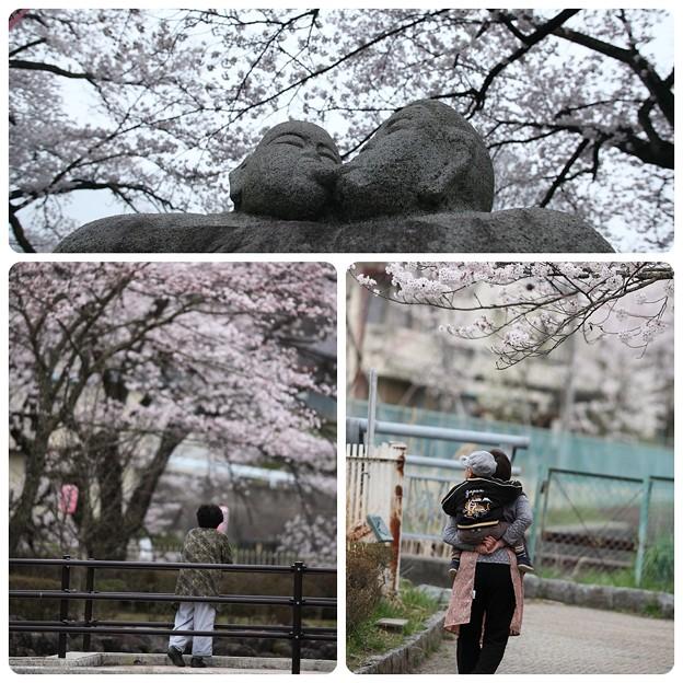 桜`12(竜門淵公園)-2