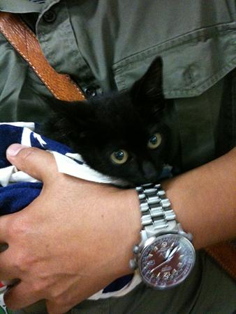 入間基地で拾った仔猫