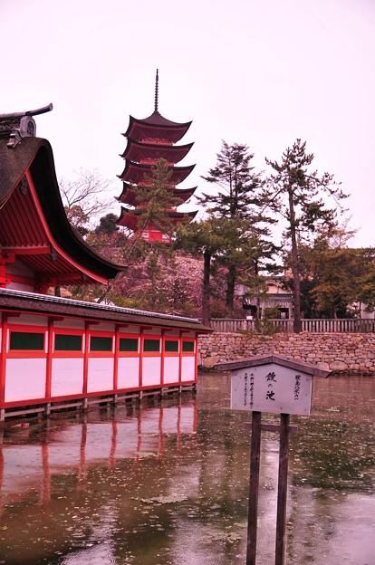 厳島神社内の鏡の池から見た五重塔 満潮。。