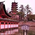 Photos: 厳島神社内の鏡の池から見た五重塔 満潮。。