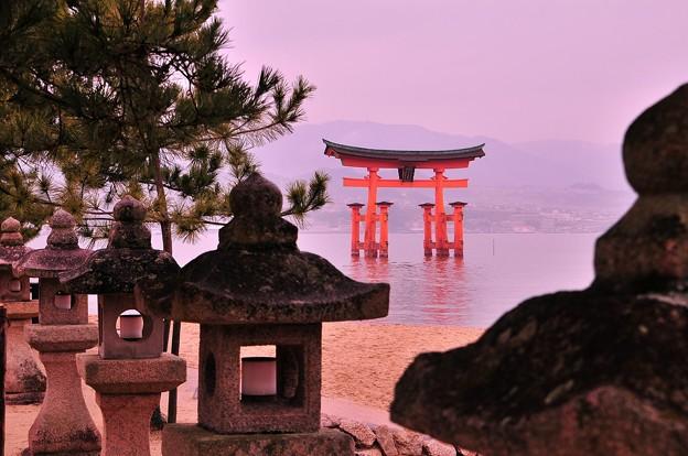 朝の宮島 灯篭から見る鳥居・・満潮
