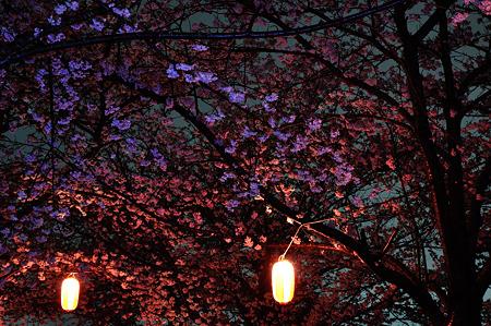 自力ライトアップで桜撮影・1