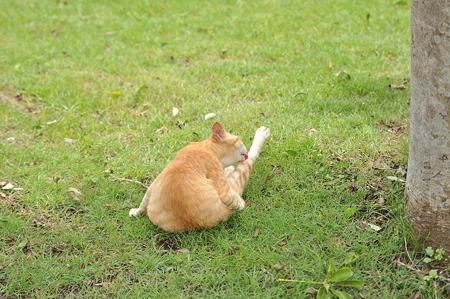 タムロンA09で猫撮影