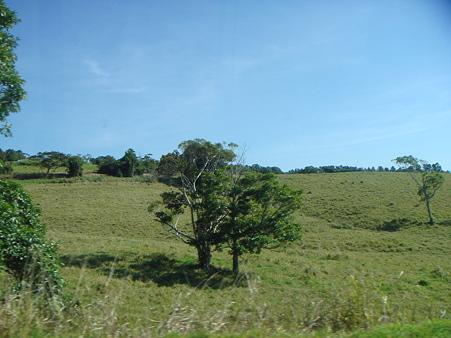熱帯雨林を抜けて草原地帯へ