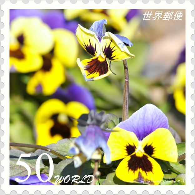<花切手*ビオラ*春を待つ>