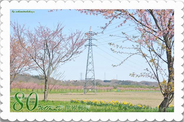 <花景色*北浅羽の桜 in 2012>