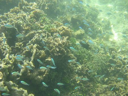 アルパット島近くで熱帯魚その16