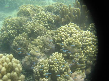 アルパット島近くで熱帯魚その22