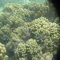 写真: アルパット島近くで熱帯魚その22