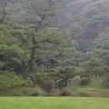 写真: 三渓園・モヤの中の庭園