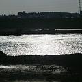 逆光の江戸川